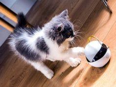 Evcil Hayvan Dadısı Akıllı Robot: Ebo
